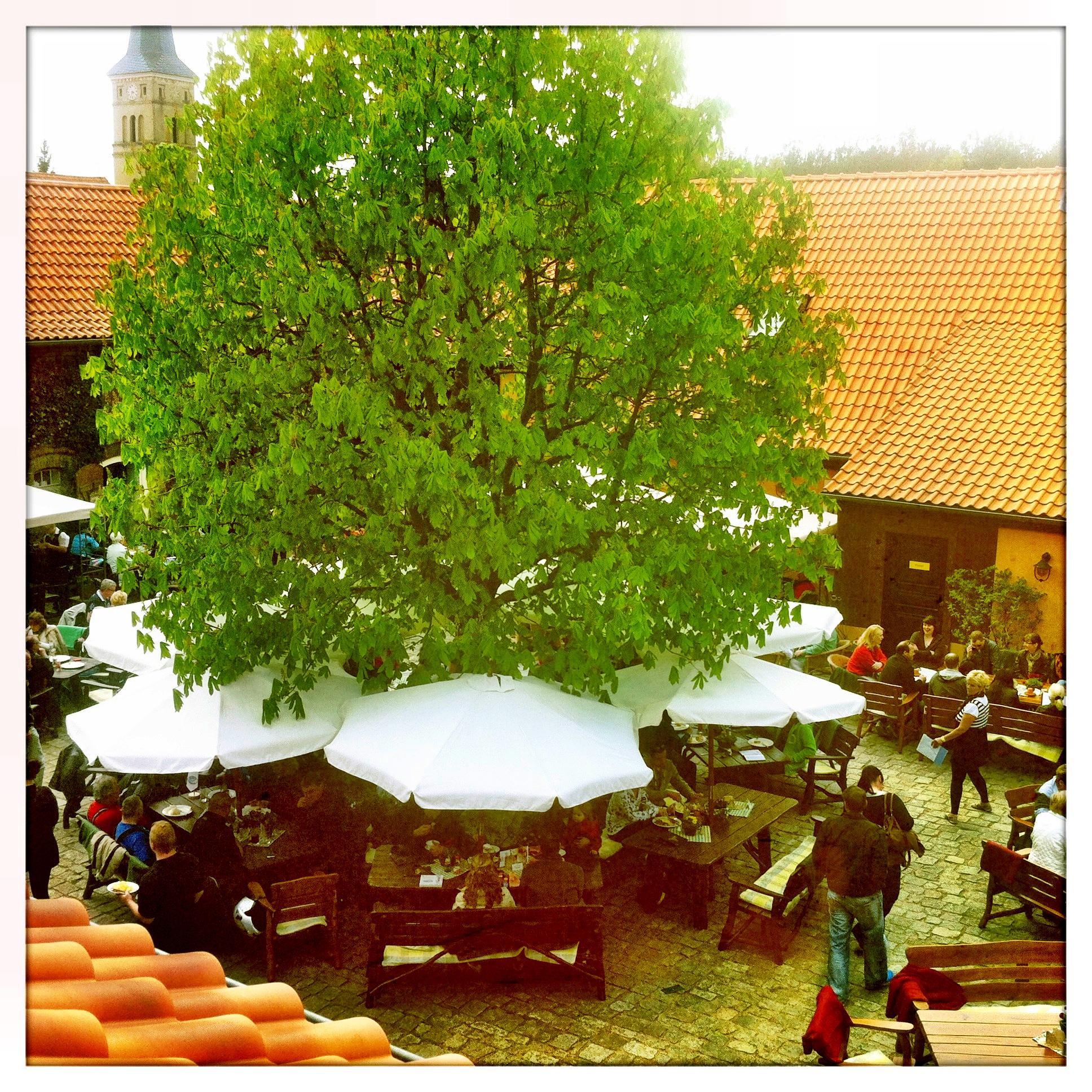 Brandenburg Beelitz | Schäpe Josef Jakobs Spargelhof | Restaurantgarten