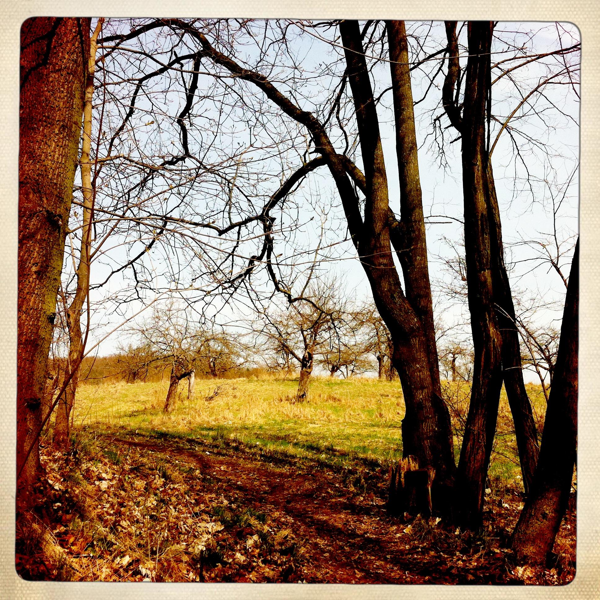 Brandenburg | Buckow | Schermützelsee | Apfelbäume