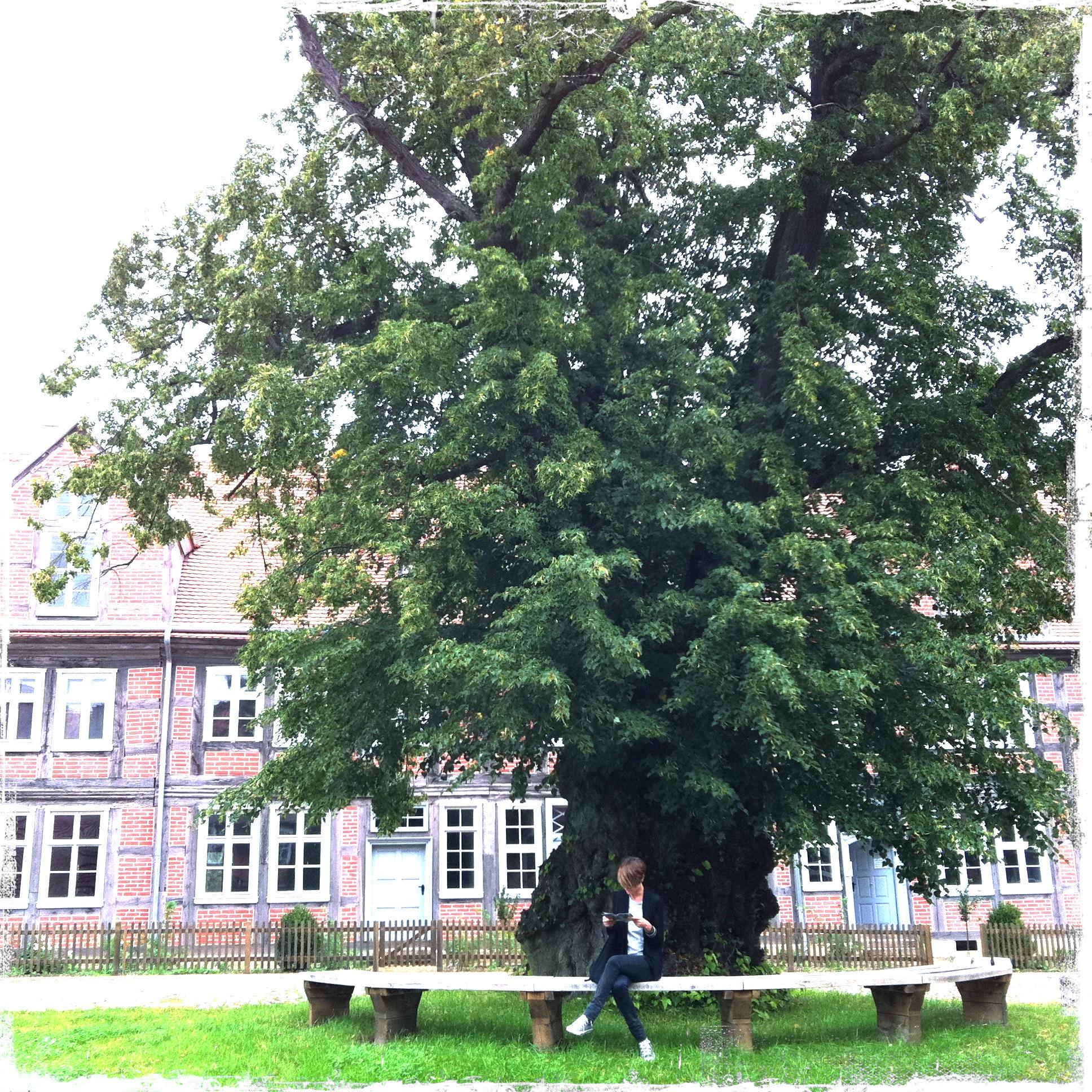 Brandenburg Kloster Stift zum Heiligengrabe I Frauenplatz