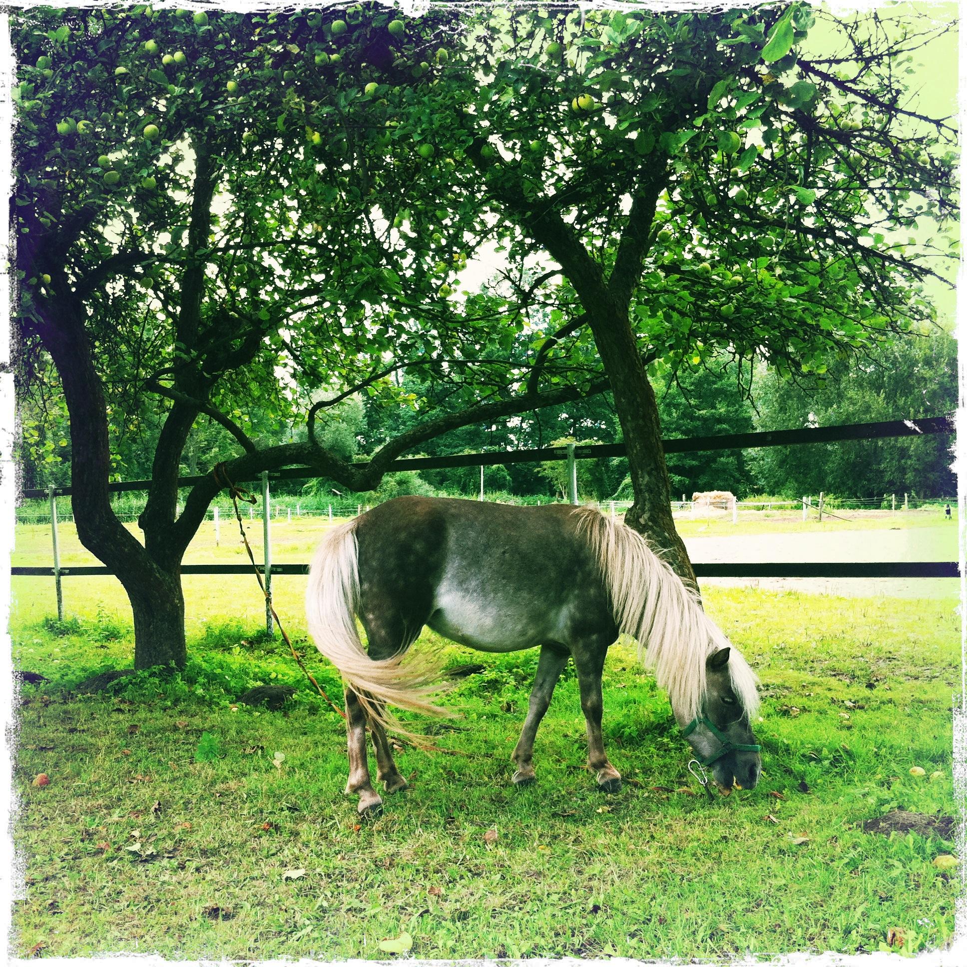 Schloss Diedersdorf - Pony