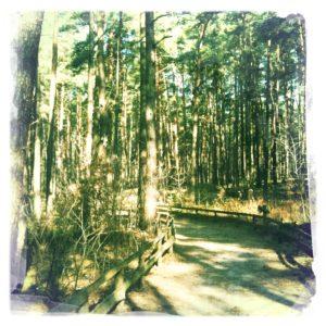 Waldschneise zum Eingang des Wildpark Schorfheide