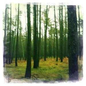 Wald bei Neuhof in Brandenburg
