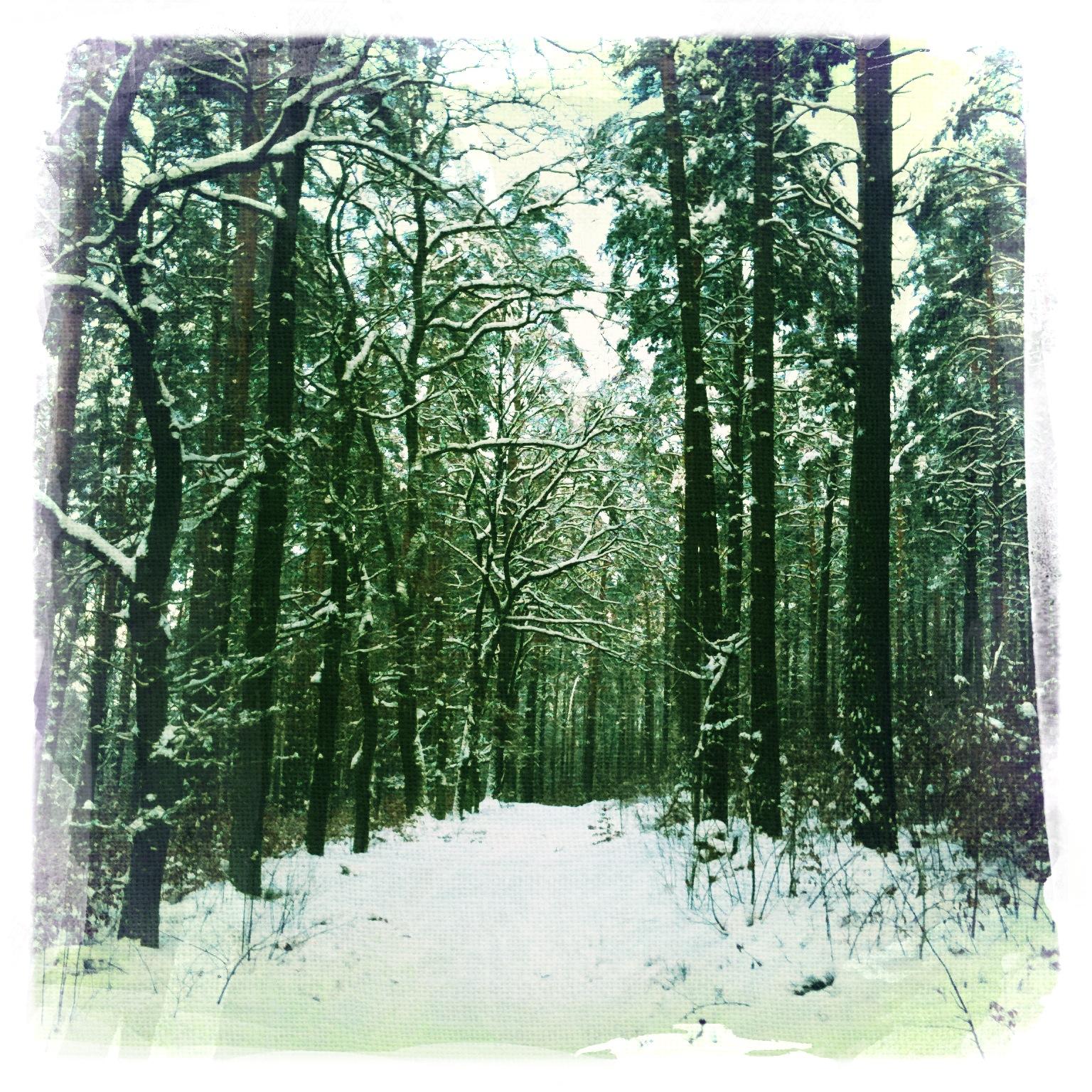 Wald-im-Winter-Briesetal-Brandenburg-6