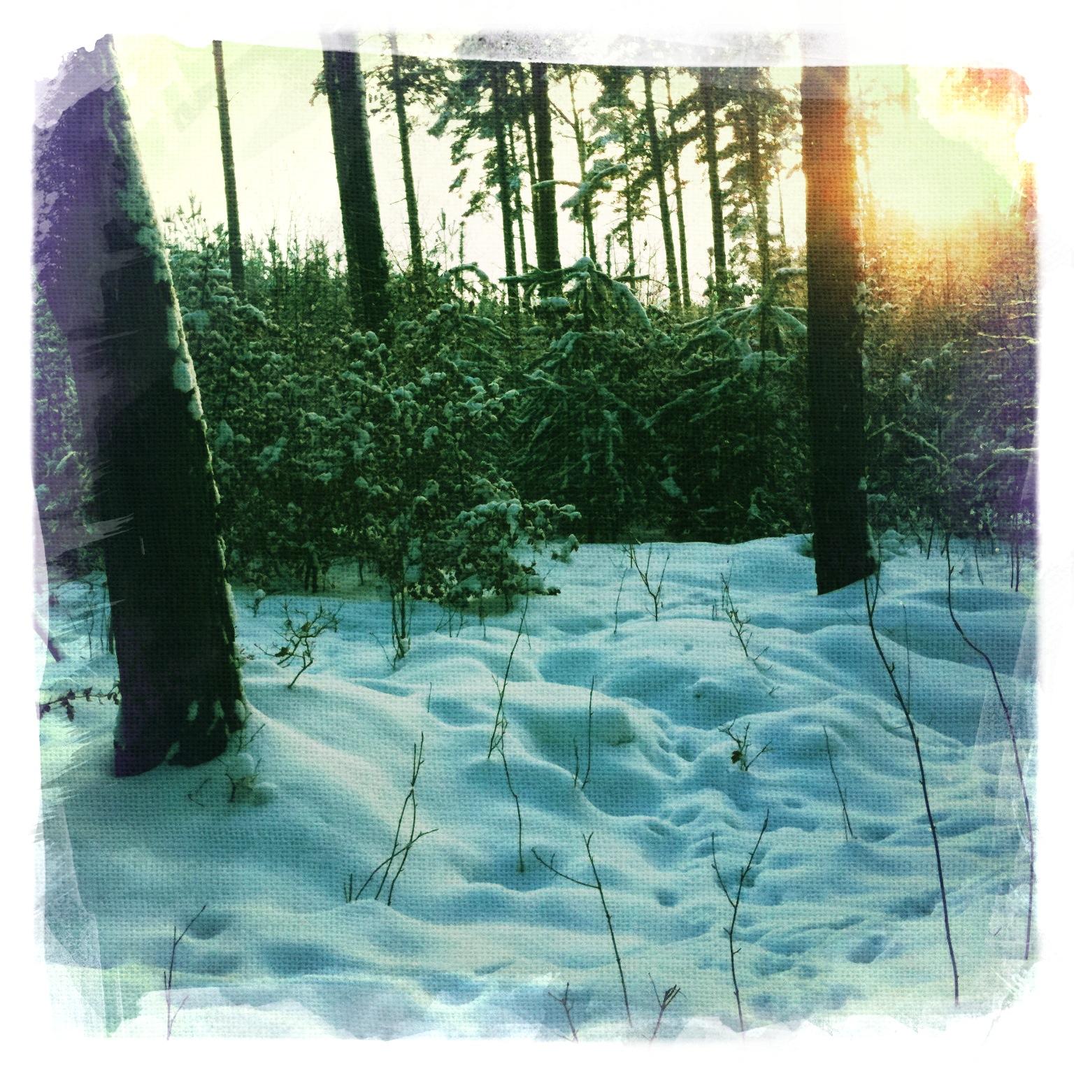 Wald-im-Winter-Briesetal-Brandenburg-3