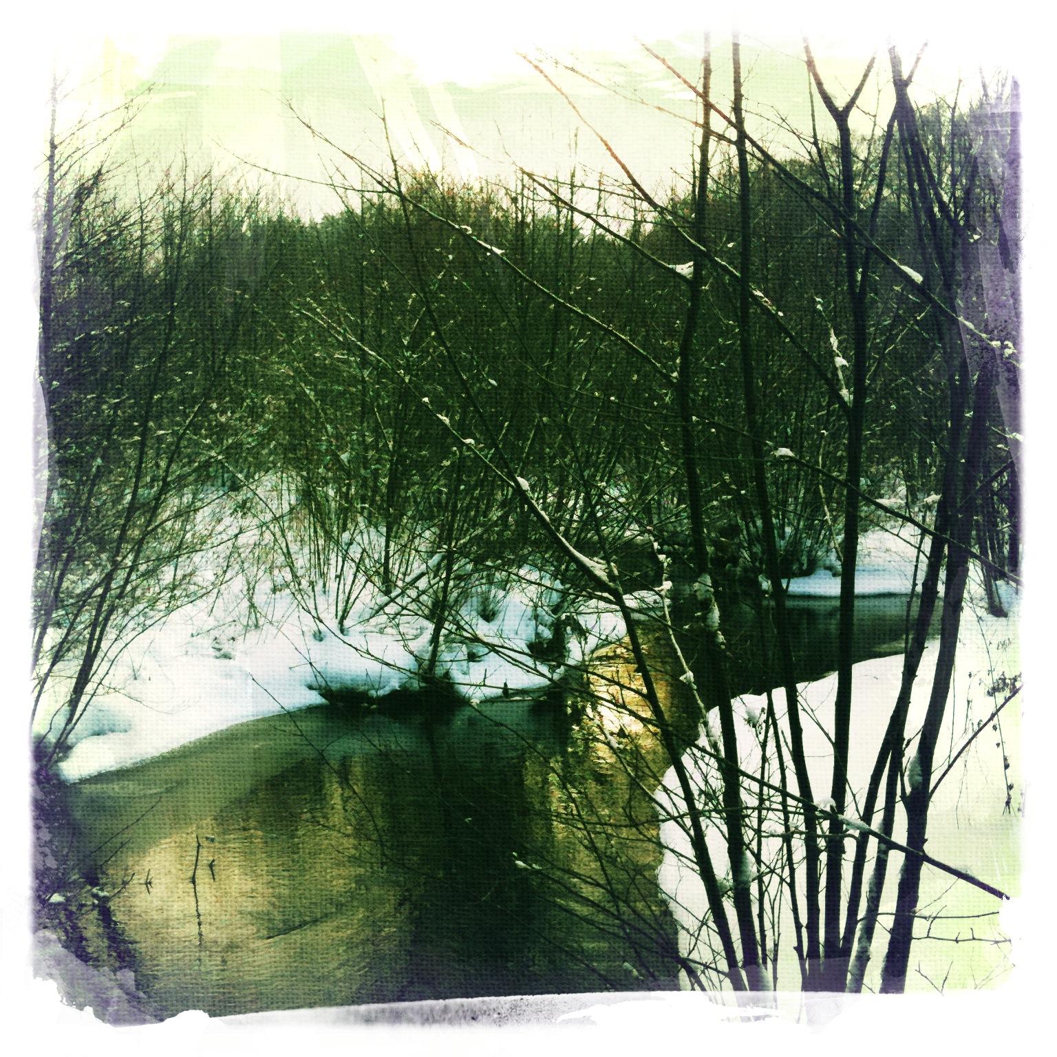 Wald-im-Winter-Briesetal-Brandenburg-4