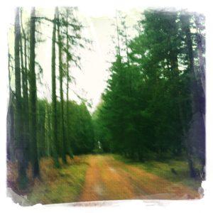 Wald bei Neuhof in Brandenburg 2
